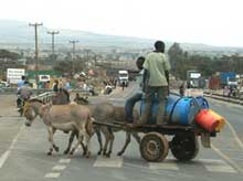 Donkey cart on road in Mai Mahiu